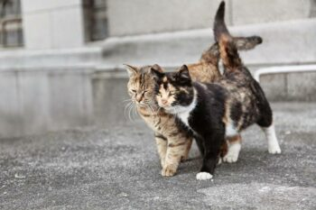 Two friend cats on a stroll