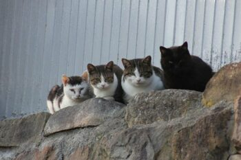 Four cats sitting on rock wall