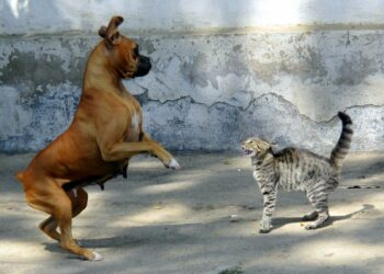 Dog confronted by mad cat