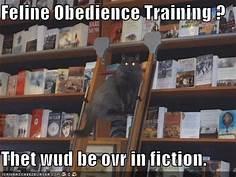 Feline Obedience Training? That wud be ovr in fiction