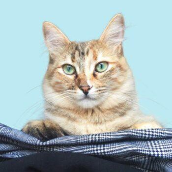 head of tabby cat