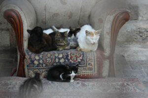 Many cats seated on chair