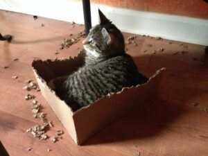 Cat sitting in box with chewed edges