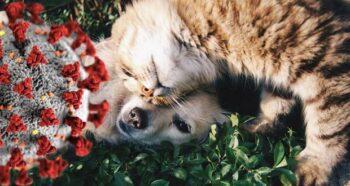 Cat loving dog; coronavirus symbol