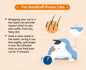Helping a dandruff-prone cat