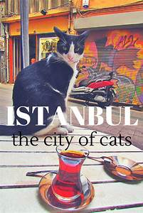 Poster advertising Istanbul, city of cats