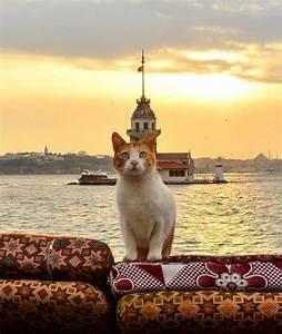 Orange & white cat; water & church on tiny island