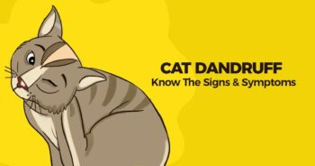 Ad: Cat Dandruff - Know the signs & Symptoms