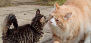 Cat and kitten meeting