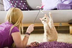 White cat batting at toy with left paw