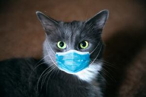 Grey cat with face mask