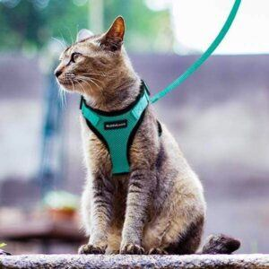 Sitting cat in harness and leash