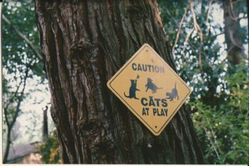 Sign on tree: Caution, cats at plahy