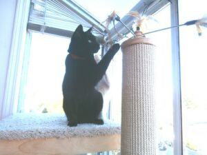 black cat playing with feather on cat tower