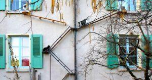 Cat ladders in Switzerland