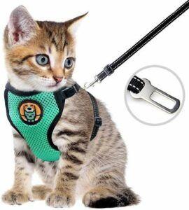 cat vest harness on little grey cat