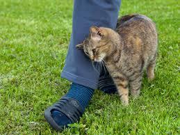 Cat rubbing against person's leg