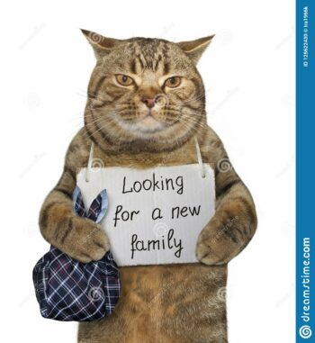 Cat with sign: looking for a new family