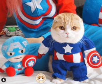 Cat in red,white,and blue costume