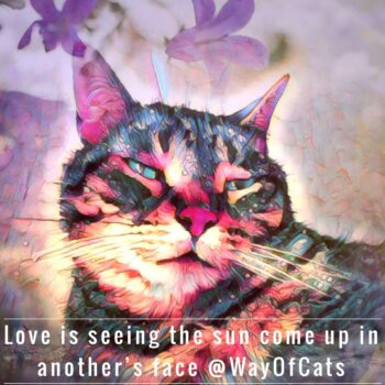 Face of cat: caption - love is seeing the sun come up in another's face