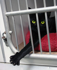 Black cat reaching paw out of cage