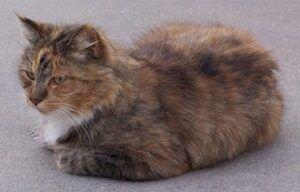 tortoise cat, hunkered down