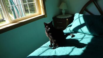 Black cat on sunny bed
