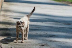 grey skinny cat