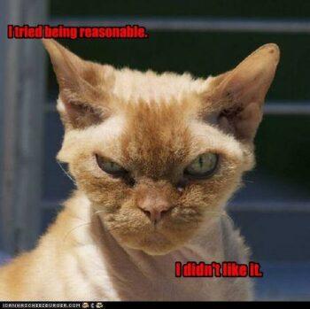 Orange cat looking mad
