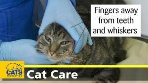 Person ready to open cat's mouth for pill