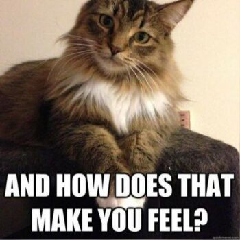 Cat with questioning look: And how does that make you feel